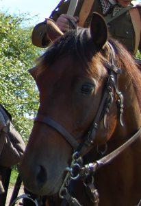 Nasze Konie Szwadron Kawalerii Im 10 Pułku Ułanów Litewskich